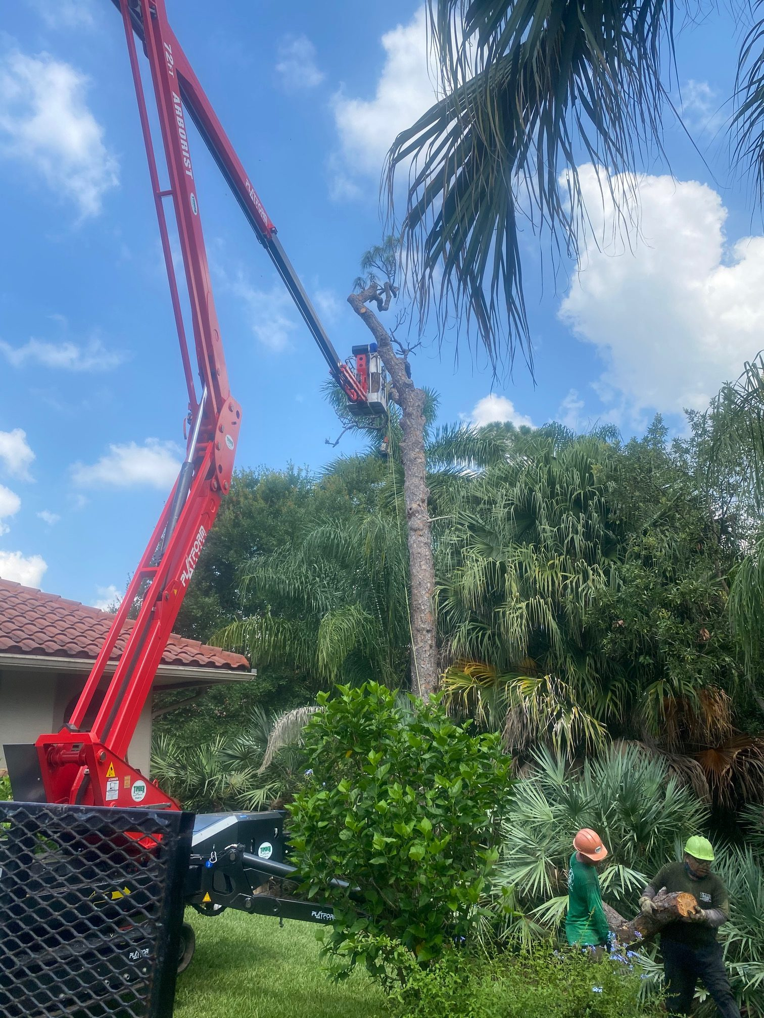 Removing Pine with 72' Tracked Lift
