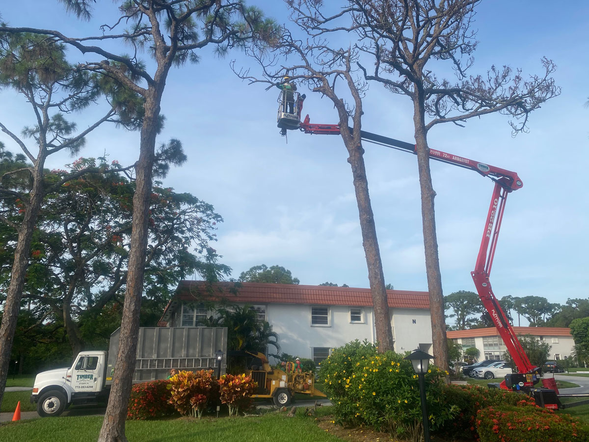 Removing Pines with 72' Tracked Lift